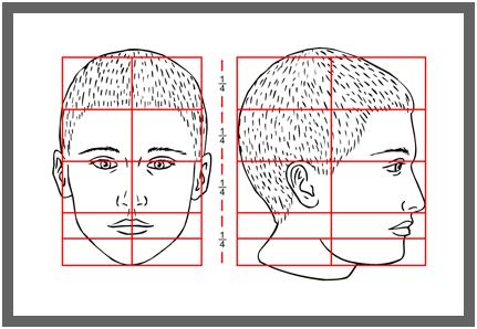 plan1 Пропорции головы
