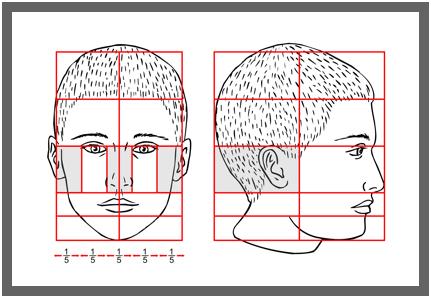 plan2 Пропорции головы