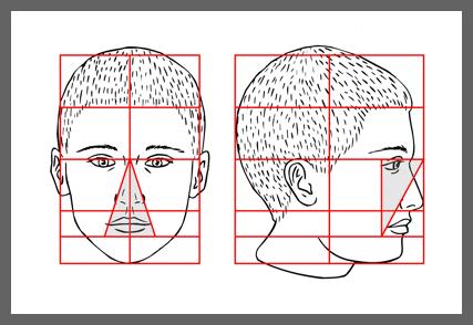 plan3 Пропорции головы